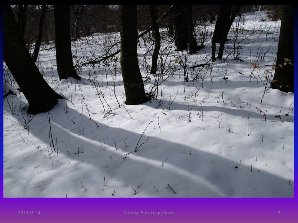 2010.03.14.Tél vége Budai hegyekben8