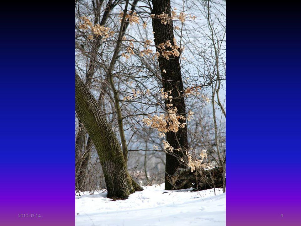 2010.03.14.Tél vége Budai hegyekben9