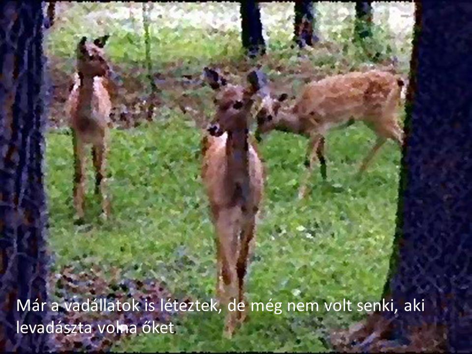 Már a vadállatok is léteztek, de még nem volt senki, aki levadászta volna őket.