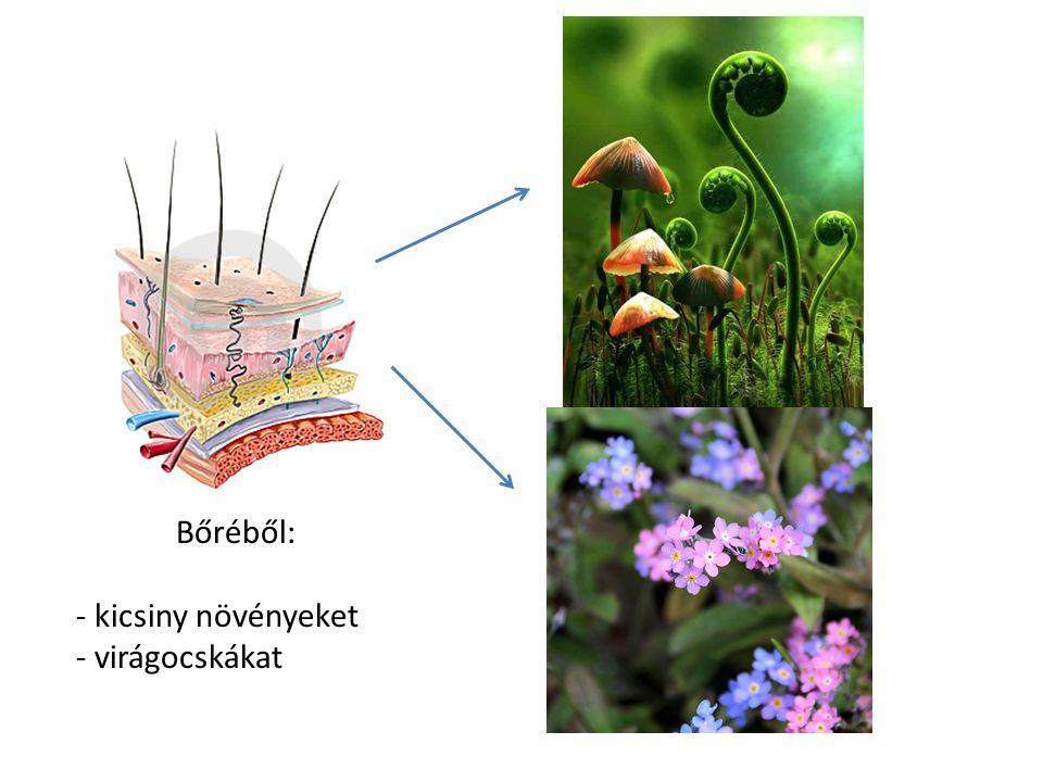 Bőréből: - kicsiny növényeket - virágocskákat