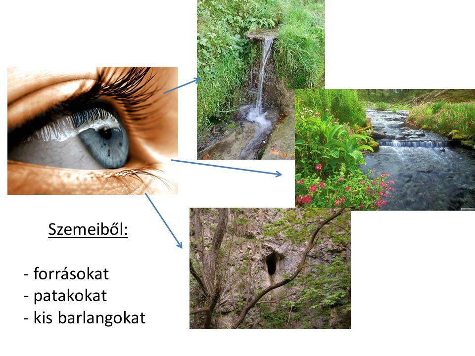 Szemeiből: - forrásokat - patakokat - kis barlangokat