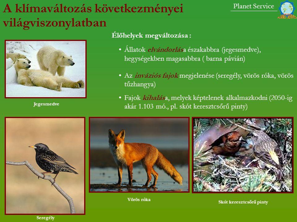 Állatok elvándorlása északabbra (jegesmedve), hegységekben magasabbra ( barna pávián) Az inváziós fajok megjelenése (seregély, vörös róka, vörös tűzhangya) Fajok kihalása, melyek képtelenek alkalmazkodni (2050-ig akár 1.103 mó., pl.