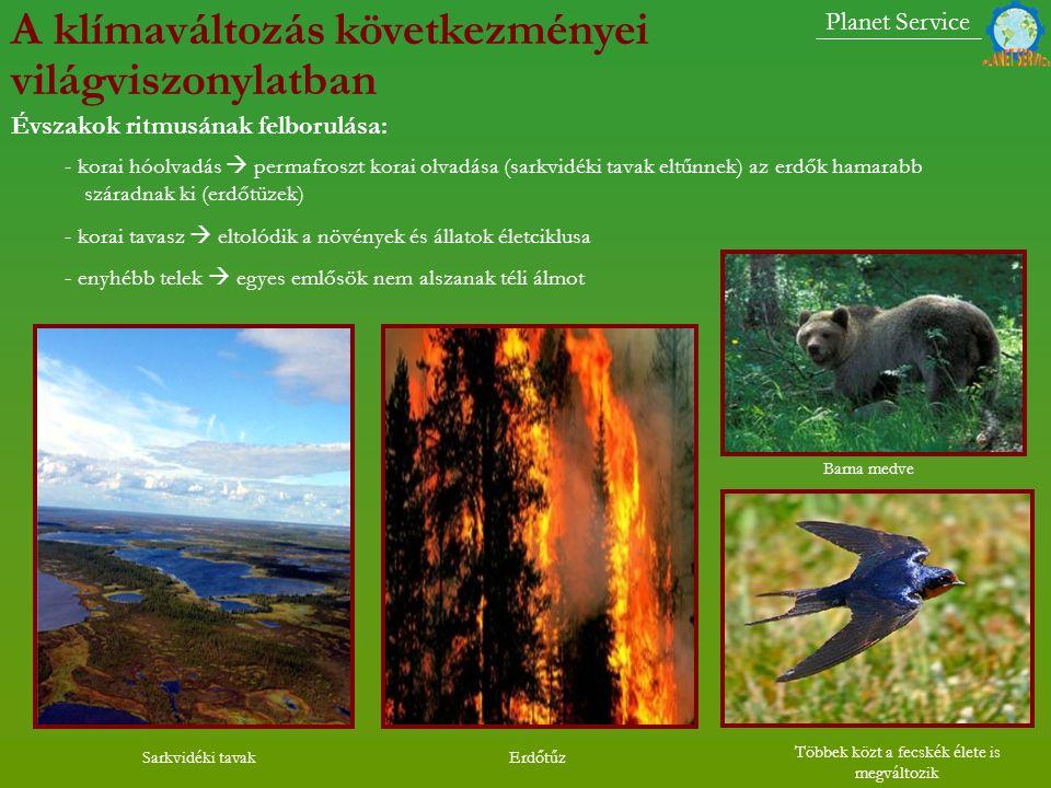 - korai hóolvadás  permafroszt korai olvadása (sarkvidéki tavak eltűnnek) az erdők hamarabb száradnak ki (erdőtüzek) - korai tavasz  eltolódik a növények és állatok életciklusa - enyhébb telek  egyes emlősök nem alszanak téli álmot Barna medve Sarkvidéki tavak Többek közt a fecskék élete is megváltozik Erdőtűz Planet Service Évszakok ritmusának felborulása: A klímaváltozás következményei világviszonylatban