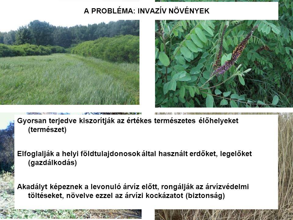 Gyorsan terjedve kiszorítják az értékes természetes élőhelyeket (természet) Elfoglalják a helyi földtulajdonosok által használt erdőket, legelőket (gazdálkodás) Akadályt képeznek a levonuló árvíz előtt, rongálják az árvízvédelmi töltéseket, növelve ezzel az árvízi kockázatot (biztonság) A PROBLÉMA: INVAZÍV NÖVÉNYEK