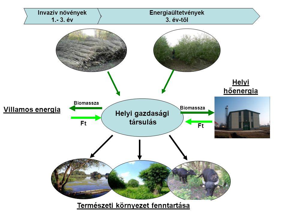 Helyi gazdasági társulás Ft Természeti környezet fenntartása Biomassza Helyi hőenergia Biomassza Ft Villamos energia Energiaültetvények 3.