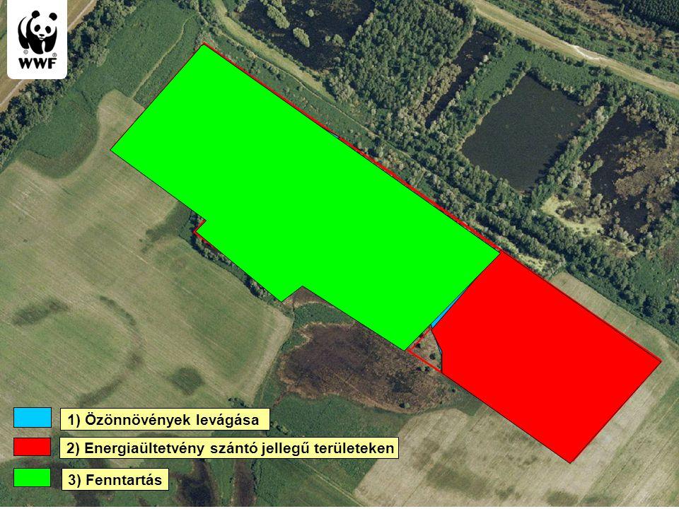 Biomass cutting Energy useful plantation 3) Fenntartás 1) Özönnövények levágása 2) Energiaültetvény szántó jellegű területeken