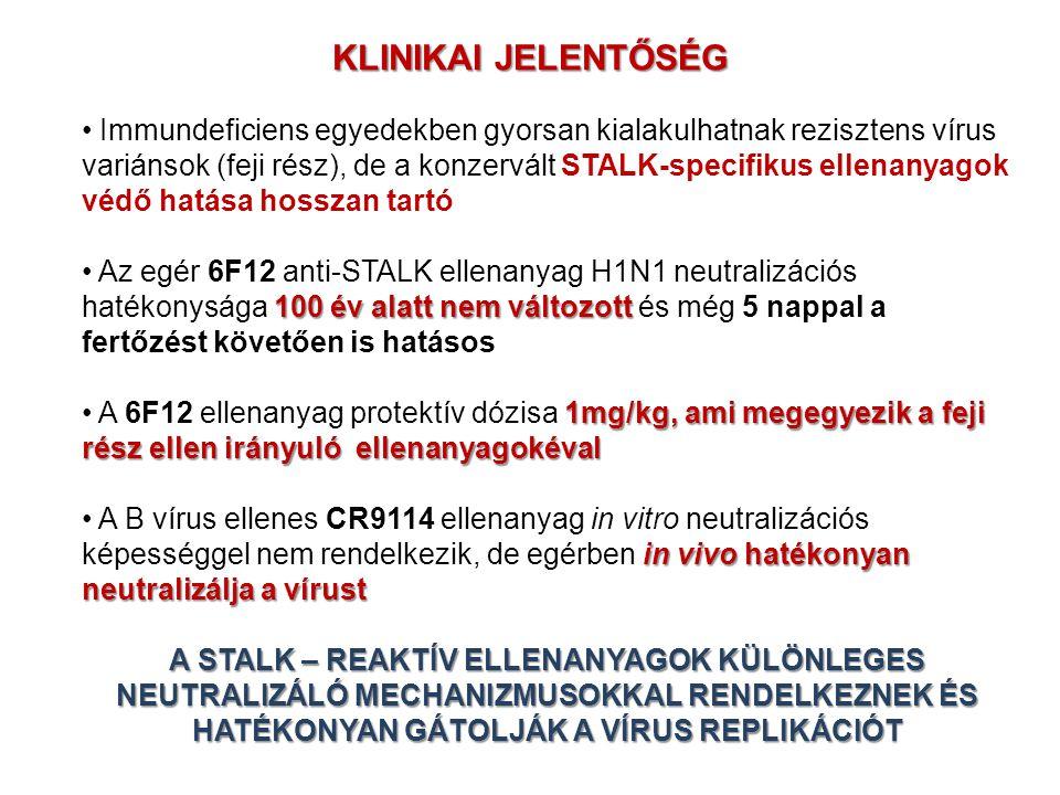 KLINIKAI JELENTŐSÉG Immundeficiens egyedekben gyorsan kialakulhatnak rezisztens vírus variánsok (feji rész), de a konzervált STALK-specifikus ellenany