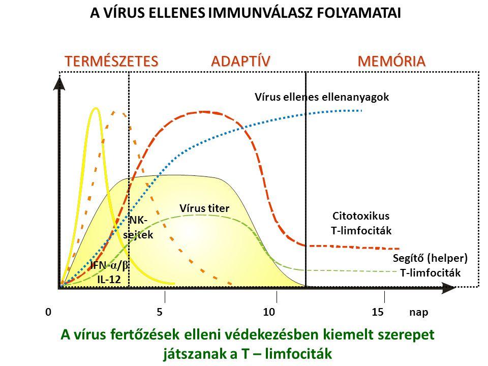 0 5 10 15 nap Vírus titer A VÍRUS ELLENES IMMUNVÁLASZ FOLYAMATAI Citotoxikus T-limfociták IFN- α / β IL-12 NK- sejtek Segítő (helper) T-limfociták Vír
