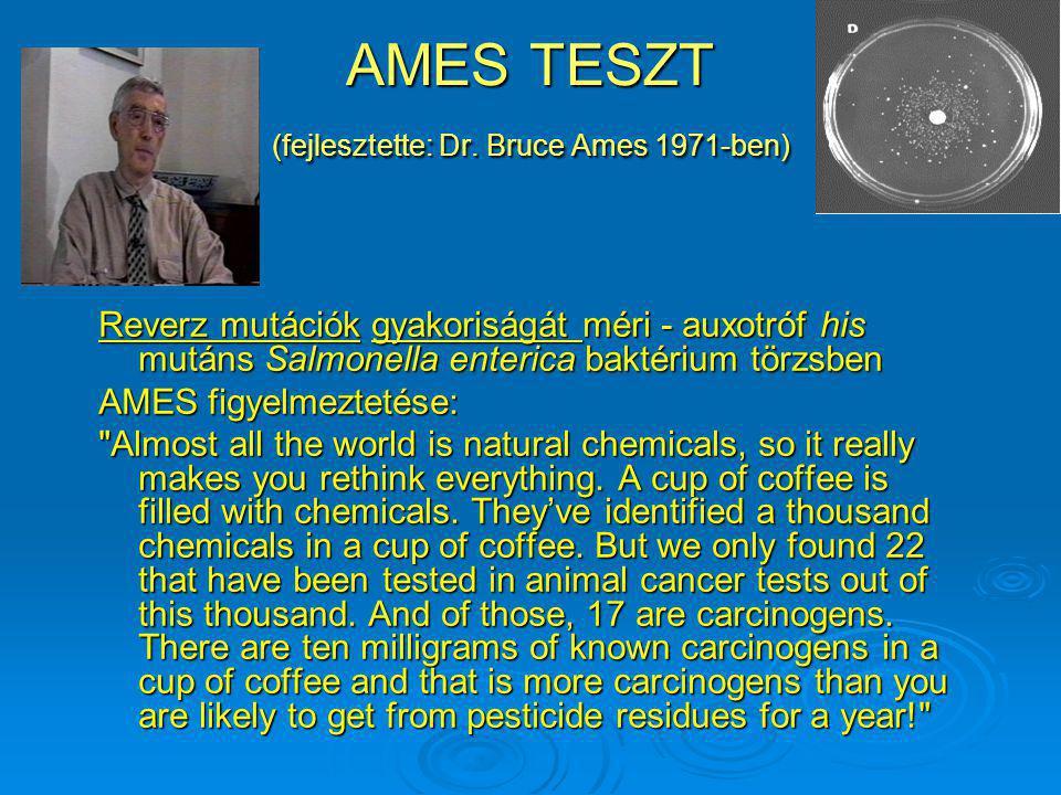 AMES TESZT (fejlesztette: Dr. Bruce Ames 1971-ben) Reverz mutációk gyakoriságát méri - auxotróf his mutáns Salmonella enterica baktérium törzsben AMES