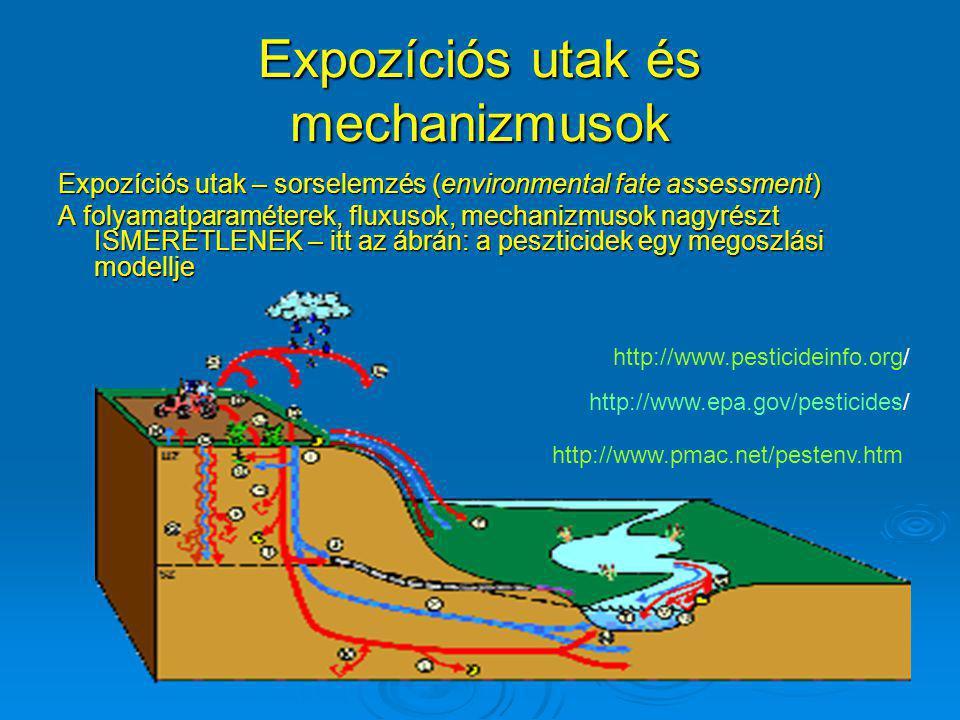 Expozíciós utak és mechanizmusok Expozíciós utak – sorselemzés (environmental fate assessment) A folyamatparaméterek, fluxusok, mechanizmusok nagyrész