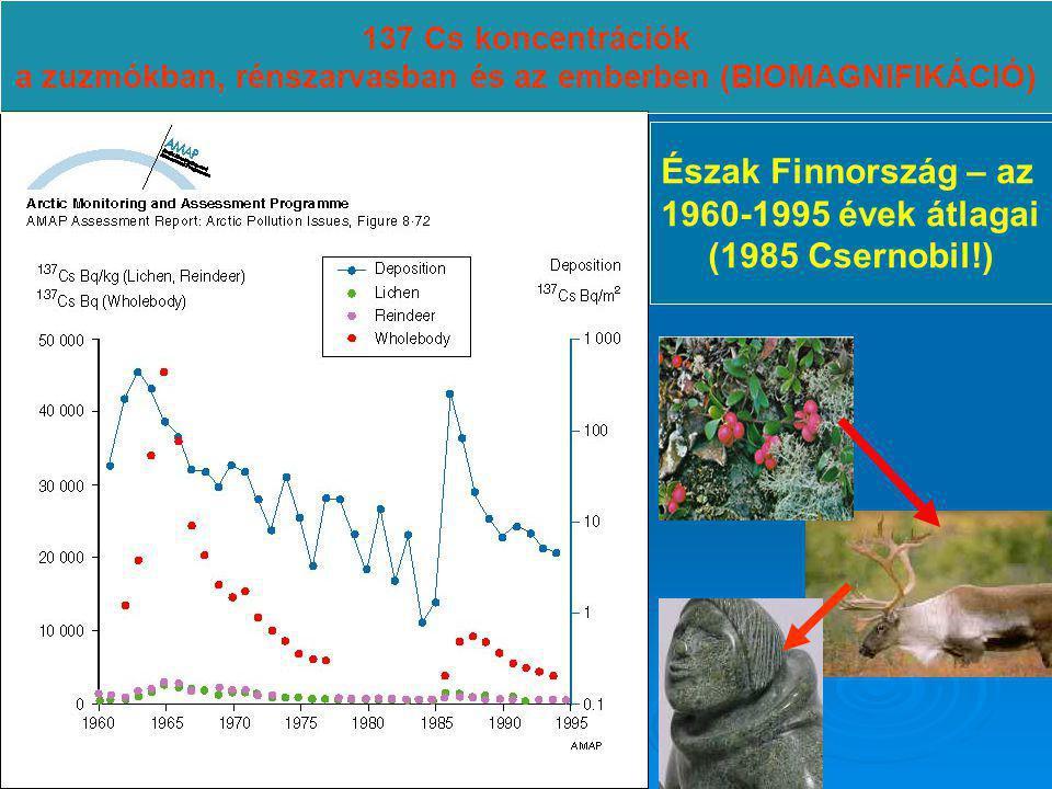 137 Cs koncentrációk a zuzmókban, rénszarvasban és az emberben (BIOMAGNIFIKÁCIÓ) Észak Finnország – az 1960-1995 évek átlagai (1985 Csernobil!)