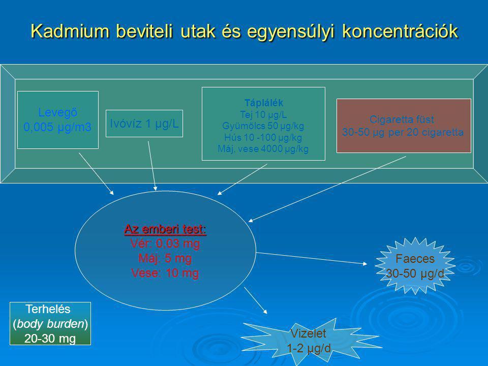 Kadmium beviteli utak és egyensúlyi koncentrációk Az emberi test: Vér: 0,03 mg Máj: 5 mg Vese: 10 mg Faeces 30-50 µg/d Levegő 0,005 µg/m3 Ivóvíz 1 µg/