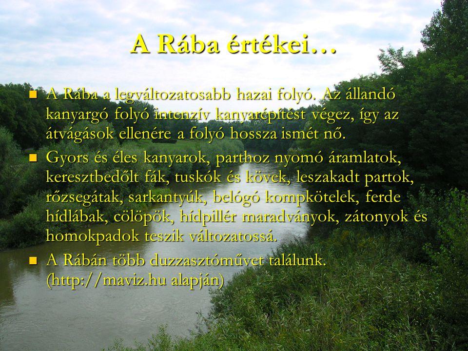 A Rába értékei… A Rába a legváltozatosabb hazai folyó. Az állandó kanyargó folyó intenzív kanyarépítést végez, így az átvágások ellenére a folyó hossz