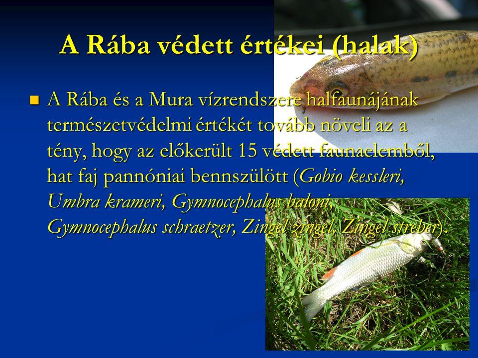 A Rába védett értékei (halak) A Rába és a Mura vízrendszere halfaunájának természetvédelmi értékét tovább növeli az a tény, hogy az előkerült 15 védet