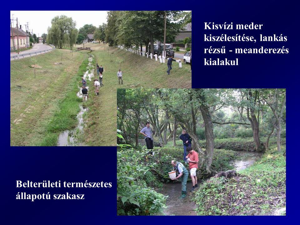Kisvízi meder kiszélesítése, lankás rézsű - meanderezés kialakul Belterületi természetes állapotú szakasz
