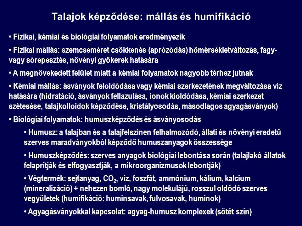 Talajok képződése: mállás és humifikáció Fizikai, kémiai és biológiai folyamatok eredményezik Fizikai mállás: szemcseméret csökkenés (aprózódás) hőmérsékletváltozás, fagy- vagy sórepesztés, növényi gyökerek hatására A megnövekedett felület miatt a kémiai folyamatok nagyobb térhez jutnak Kémiai mállás: ásványok feloldódása vagy kémiai szerkezetének megváltozása víz hatására (hidratáció, ásványok fellazulása, ionok kioldódása, kémiai szerkezet szétesése, talajkolloidok képződése, kristályosodás, másodlagos agyagásványok) Biológiai folyamatok: humuszképződés és ásványosodás Humusz: a talajban és a talajfelszínen felhalmozódó, állati és növényi eredetű szerves maradványokból képződő humuszanyagok összessége Humuszképződés: szerves anyagok biológiai lebontása során (talajlakó állatok felaprítják és elfogyasztják, a mikroorganizmusok lebontják) Végtermék: sejtanyag, CO 2, víz, foszfát, ammónium, kálium, kalcium (mineralizáció) + nehezen bomló, nagy molekulájú, rosszul oldódó szerves vegyületek (humifikáció: huminsavak, fulvosavak, huminok) Agyagásványokkal kapcsolat: agyag-humusz komplexek (sötét szín)