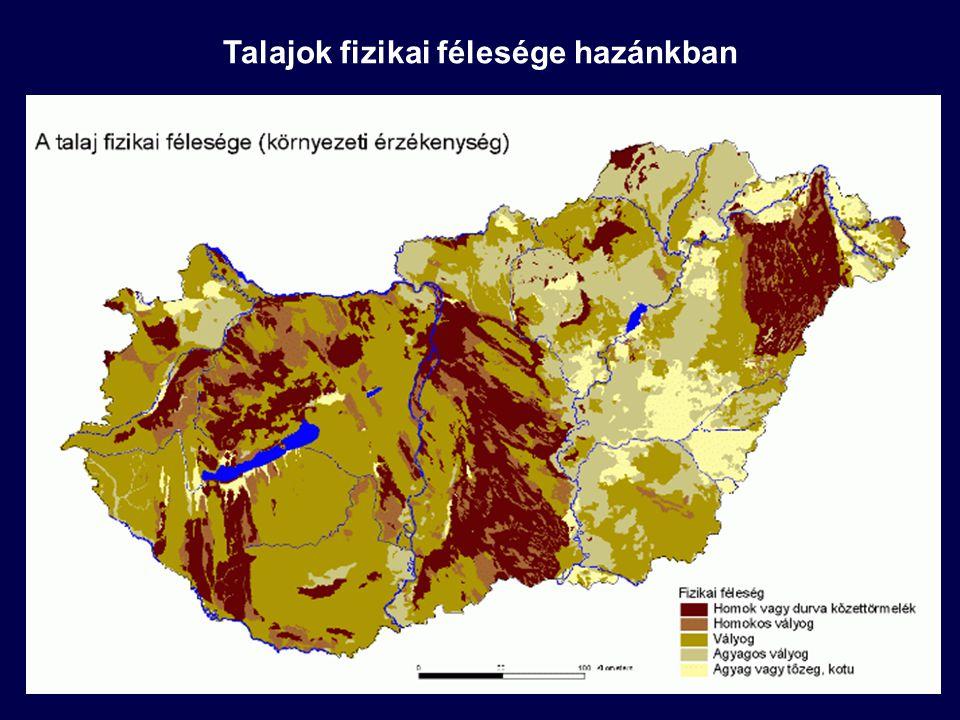 """Víz a talajban - talajok vízháztartása Utánpótlódás: csapadékvíz (lefolyik a felszínen vagy beszivárog a talajba), levegő páratartalmának megkötődése Beszivárgó víz: gravitációs vízként halad lefelé (szivárgás a talajvízig) vagy tározódik a talajban (megkötött víz) Megkötődés: a talajszemcsék felületén adszorpcióval történik (hidrátburok) A nehézségi erővel szemben a talajszemcse-vízmolekula kohéziója mellett a vízmolekulák egymás közti vonzóereje (adhézió) tartja a vizet a pórusokban (+ felfelé történő talajvízszállítás – kapillaritás) Vízkapacitás (vízmegtartó képesség): a szemcseméret függvénye (több adszorpciós felület) Szabadföldi vízkapacitás: az a vízmennyiség, amit az adott talaj a nehézségi erővel szemben még tárolni tud (nincs szivárgás) Hervadáspont: az a vízmennyiség, amely még felvehető a növények gyökerei által (ez alatti vízmennyiség """"holtvíz )"""