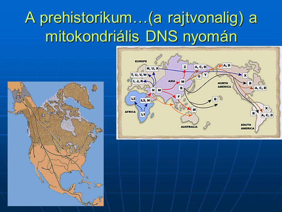 A prehistorikum…(a rajtvonalig) a mitokondriális DNS nyomán