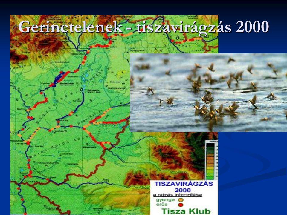 """Következtetések az üledékben mért eredmények alapján A tiszai üledék """"átlagos szennyezettsége az európai preindusztriális szintet mutatja A tiszai üledék """"átlagos szennyezettsége az európai preindusztriális szintet mutatja A nehézfém koncentrációk eloszlása a hossz-szelvény mentén erősen inhomogén – kiülepedési zónák A nehézfém koncentrációk eloszlása a hossz-szelvény mentén erősen inhomogén – kiülepedési zónák A nehézfémek biológiai hozzáférhetőségét szabályozó hely-specifikus mechanizmusok jórészt ismeretlenek A nehézfémek biológiai hozzáférhetőségét szabályozó hely-specifikus mechanizmusok jórészt ismeretlenek Az eutrofizáció, savasodás, lokális szennyvíz bevezetések hatásai a fémek kioldódási folyamatait ( release ) elősegít(het)ik Az eutrofizáció, savasodás, lokális szennyvíz bevezetések hatásai a fémek kioldódási folyamatait ( release ) elősegít(het)ik"""