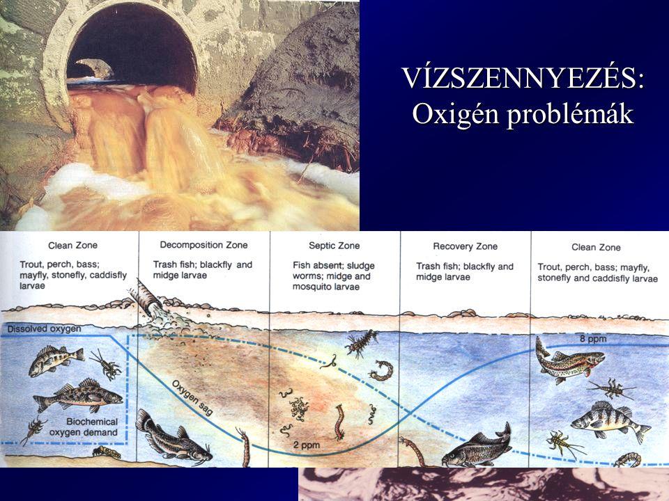 VÍZSZENNYEZÉS: Oxigén problémák