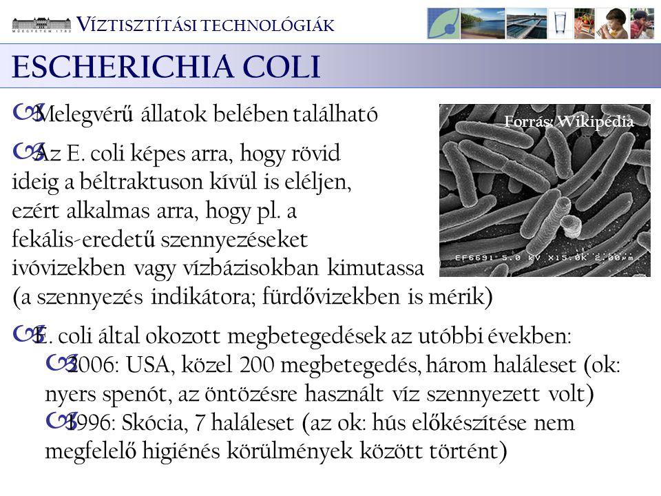 V ÍZTISZTÍTÁSI TECHNOLÓGIÁK ESCHERICHIA COLI  Melegvér ű állatok belében található  Az E. coli képes arra, hogy rövid ideig a béltraktuson kívül is