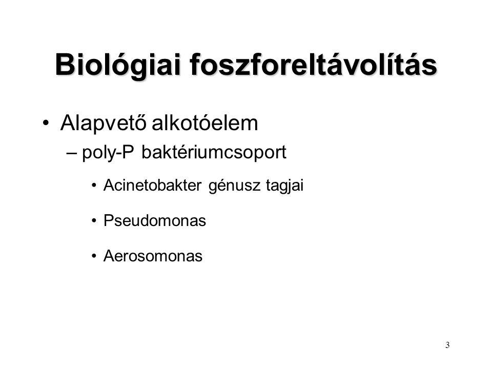 3 Alapvető alkotóelem –poly-P baktériumcsoport Acinetobakter génusz tagjai Pseudomonas Aerosomonas