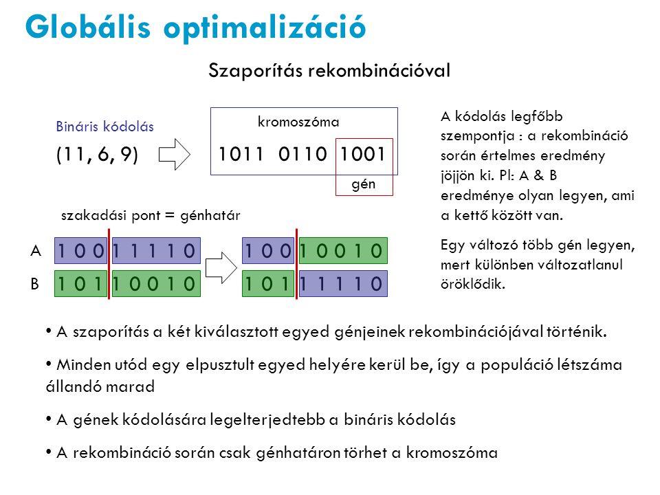 Globális optimalizáció Szaporítás rekombinációval A szaporítás a két kiválasztott egyed génjeinek rekombinációjával történik. Minden utód egy elpusztu