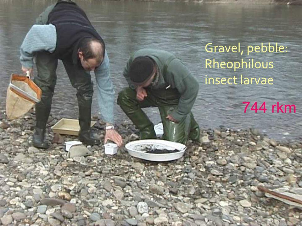 Gravel, pebble: Rheophilous insect larvae 744 rkm