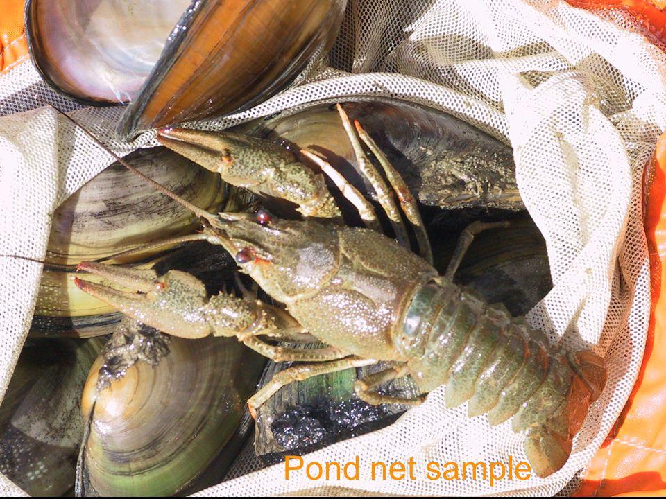 Pond net sample