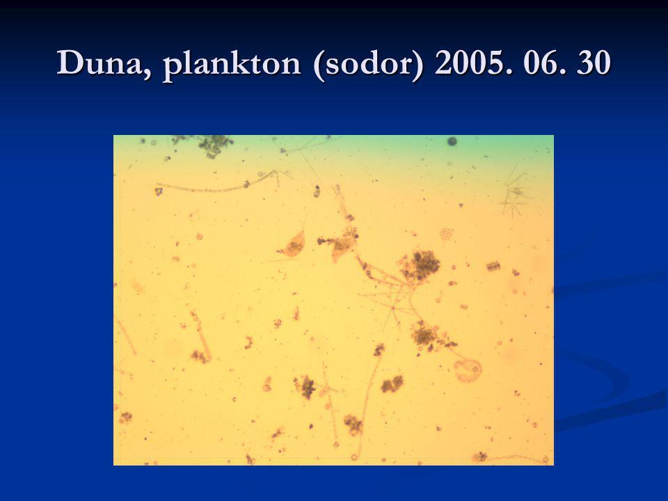 Duna, plankton (sodor) 2005. 06. 30