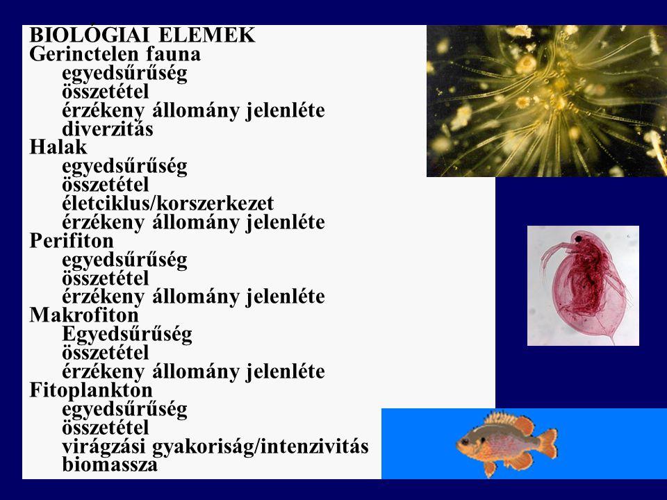 BIOLÓGIAI ELEMEK Gerinctelen fauna egyedsűrűség összetétel érzékeny állomány jelenléte diverzitás Halak egyedsűrűség összetétel életciklus/korszerkezet érzékeny állomány jelenléte Perifiton egyedsűrűség összetétel érzékeny állomány jelenléte Makrofiton Egyedsűrűség összetétel érzékeny állomány jelenléte Fitoplankton egyedsűrűség összetétel virágzási gyakoriság/intenzivitás biomassza