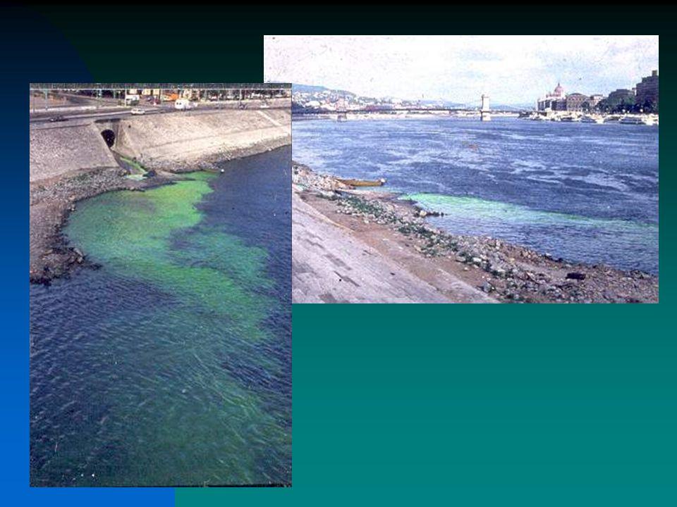 Intézkedések a Víz Keretirányelv keretében Összes többi intézkedés koordinálása ivóvízfürdővíz településiszennyvíz nitrátok IPPC & egyéb ipari kibocsátások vegyi anyagok (76/464)növényvédő-szerekbiocideklerakókszennyvíz-iszap