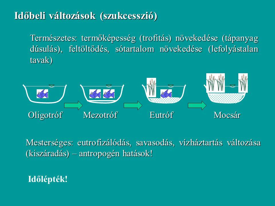 Természetes: termőképesség (trofitás) növekedése (tápanyag dúsulás), feltöltődés, sótartalom növekedése (lefolyástalan tavak) Mesterséges: eutrofizáló