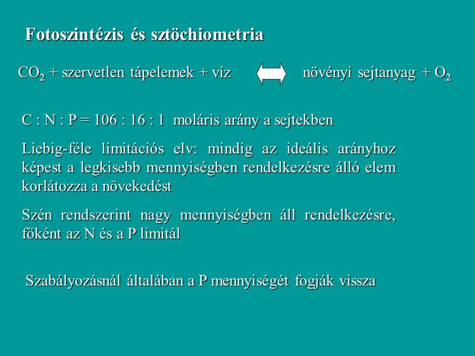 """Detritusz egyenlet Alga pusztulás: D 0  (T-20) AP Pusztulási ráta (0.1-1 1/nap) Hőmérsékleti korrekciós tényező (  1.05-1.08) + k Z AP Zooplankton """"legelés Mineralizáció: M 0  (T-20) AP Mineralizációs ráta Hőmérsékleti korrekciós tényező"""