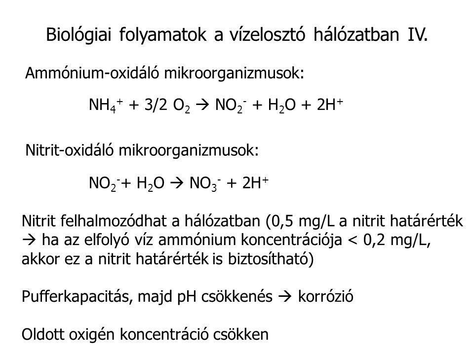 Biológiai folyamatok a vízelosztó hálózatban IV. Ammónium-oxidáló mikroorganizmusok: NH 4 + + 3/2 O 2  NO 2 - + H 2 O + 2H + Nitrit-oxidáló mikroorga