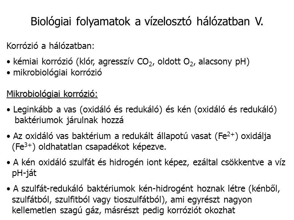 Biológiai folyamatok a vízelosztó hálózatban V. Korrózió a hálózatban: kémiai korrózió (klór, agresszív CO 2, oldott O 2, alacsony pH) mikrobiológiai