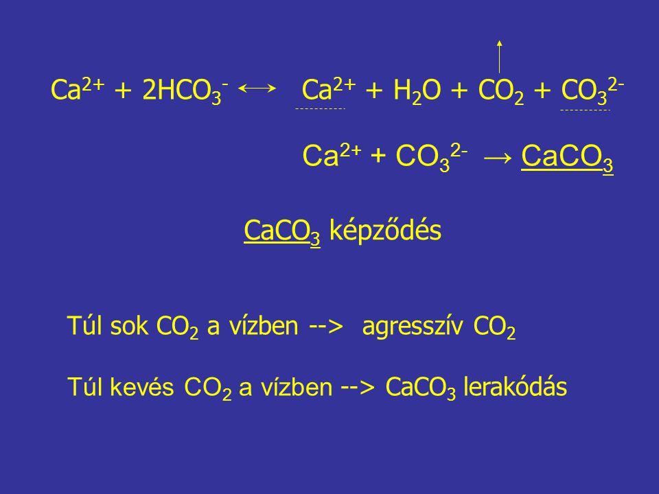 Ca 2+ + 2HCO 3 - Ca 2+ + H 2 O + CO 2 + CO 3 2- Ca 2+ + CO 3 2- → CaCO 3 CaCO 3 képződés Túl sok CO 2 a vízben --> agresszív CO 2 Túl kevés CO 2 a víz