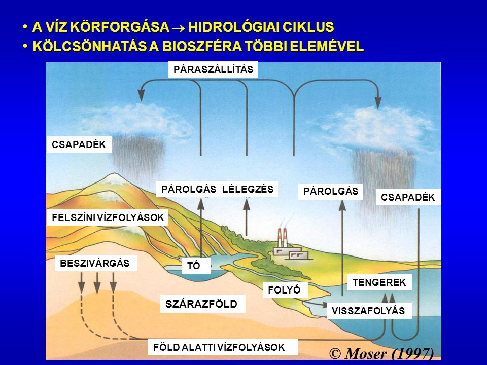 SZÁRAZFÖLD FELSZÍNI VÍZFOLYÁSOK PÁROLGÁS CSAPADÉK LÉLEGZÉSPÁROLGÁS CSAPADÉK PÁRASZÁLLÍTÁS BESZIVÁRGÁS FÖLD ALATTI VÍZFOLYÁSOK TENGEREK FOLYÓ TÓ VISSZAFOLYÁS © Moser (1997) A VÍZ KÖRFORGÁSA  HIDROLÓGIAI CIKLUS A VÍZ KÖRFORGÁSA  HIDROLÓGIAI CIKLUS KÖLCSÖNHATÁS A BIOSZFÉRA TÖBBI ELEMÉVEL KÖLCSÖNHATÁS A BIOSZFÉRA TÖBBI ELEMÉVEL