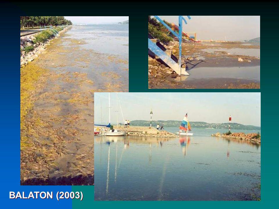 BALATON (2003)