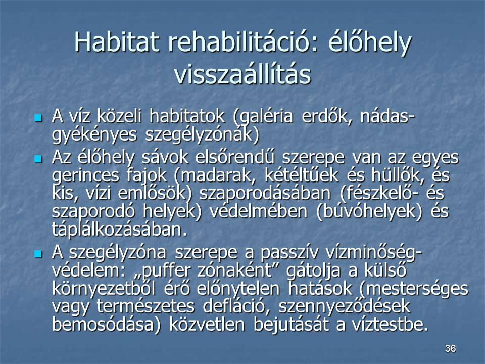 36 Habitat rehabilitáció: élőhely visszaállítás A víz közeli habitatok (galéria erdők, nádas- gyékényes szegélyzónák) A víz közeli habitatok (galéria