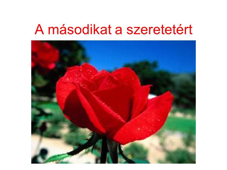Egy rózsát a barátságért
