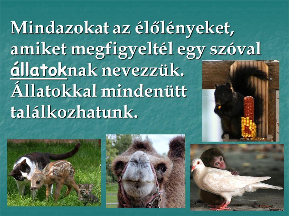 Mindazokat az élőlényeket, amiket megfigyeltél egy szóval állatoknak nevezzük. Állatokkal mindenütt találkozhatunk.