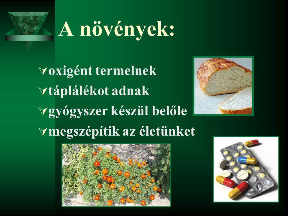 A növények:  oxigént termelnek  táplálékot adnak  gyógyszer készül belőle  megszépítik az életünket