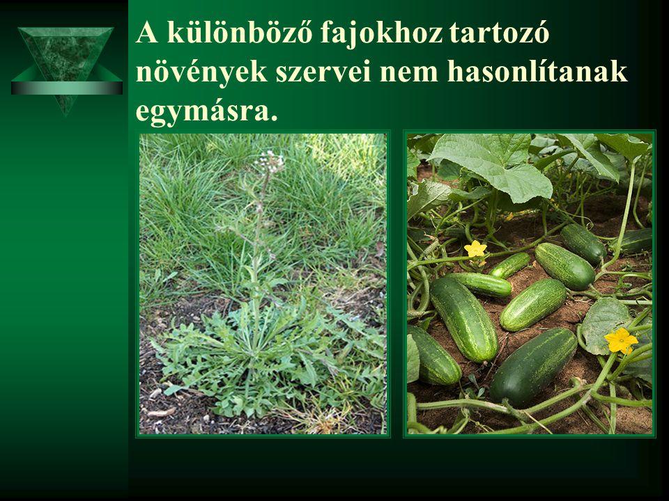 A különböző fajokhoz tartozó növények szervei nem hasonlítanak egymásra.