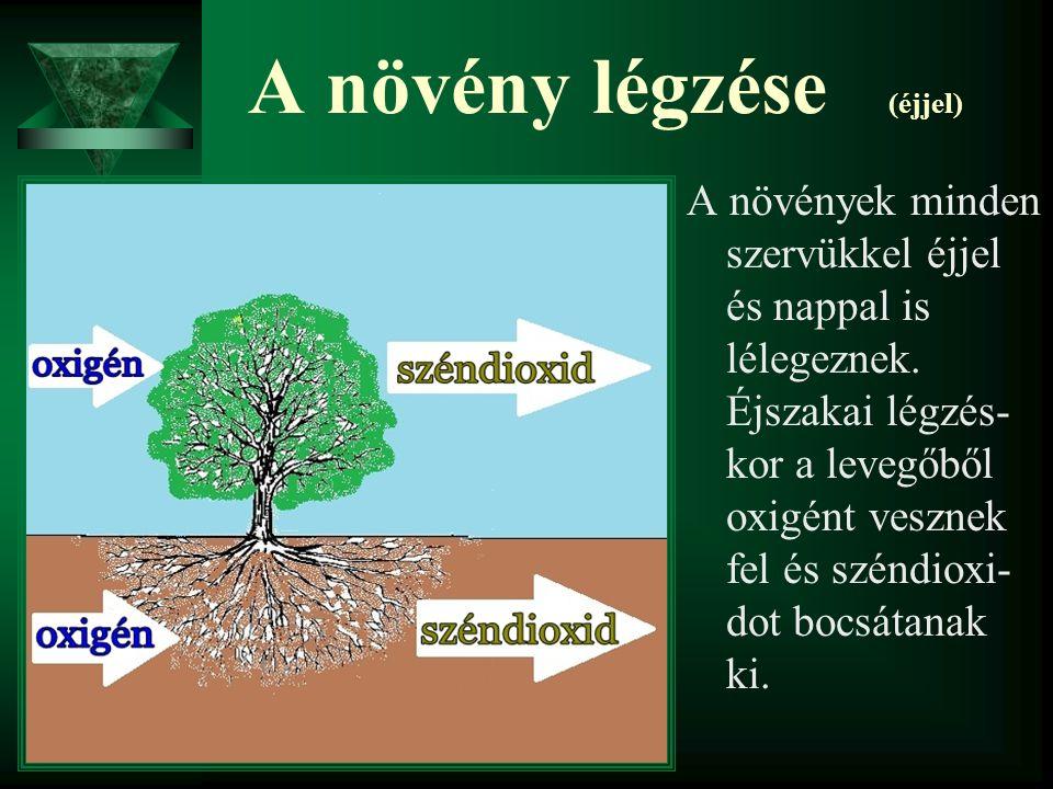 A növény légzése (éjjel) A növények minden szervükkel éjjel és nappal is lélegeznek. Éjszakai légzés- kor a levegőből oxigént vesznek fel és széndioxi