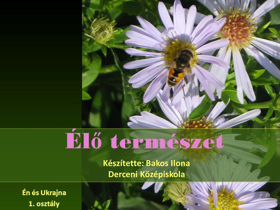 Él ő természet Készítette: Bakos Ilona Derceni Középiskola Én és Ukrajna 1. osztály