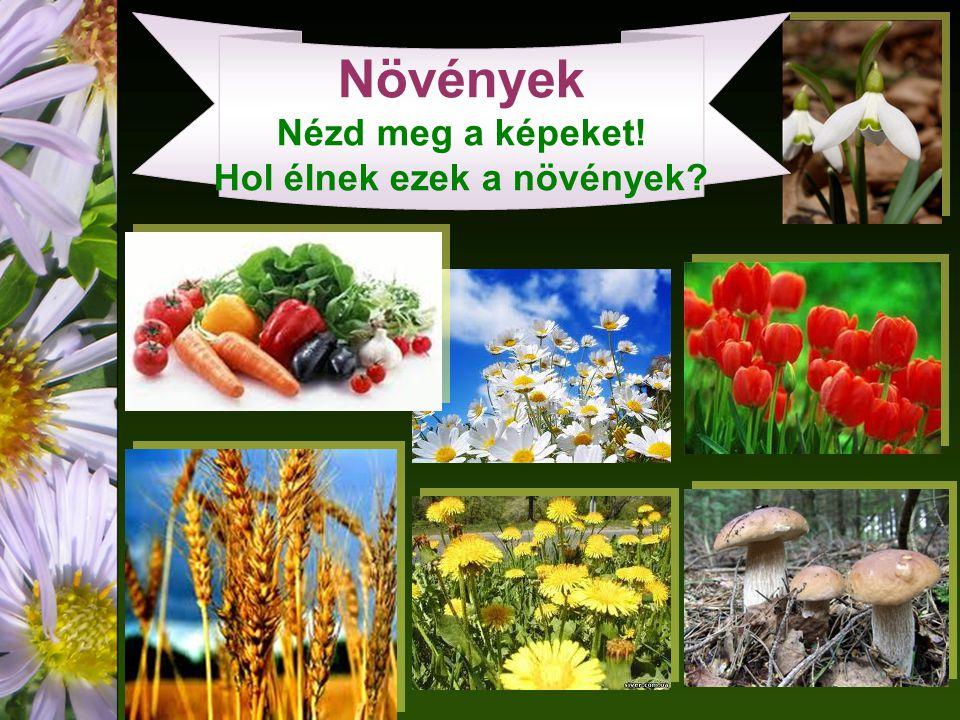 Növények Nézd meg a képeket! Hol élnek ezek a növények?