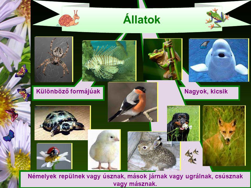 Nagyok, kicsik Különböző formájúak Némelyek repülnek vagy úsznak, mások járnak vagy ugrálnak, csúsznak vagy másznak.