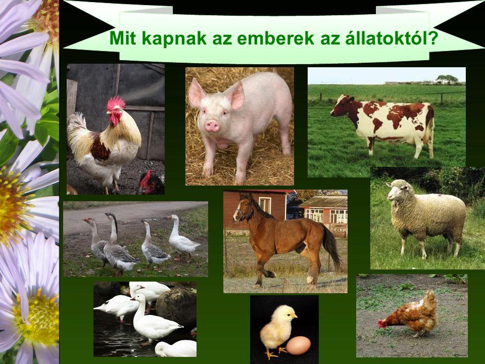 Mit kapnak az emberek az állatoktól?