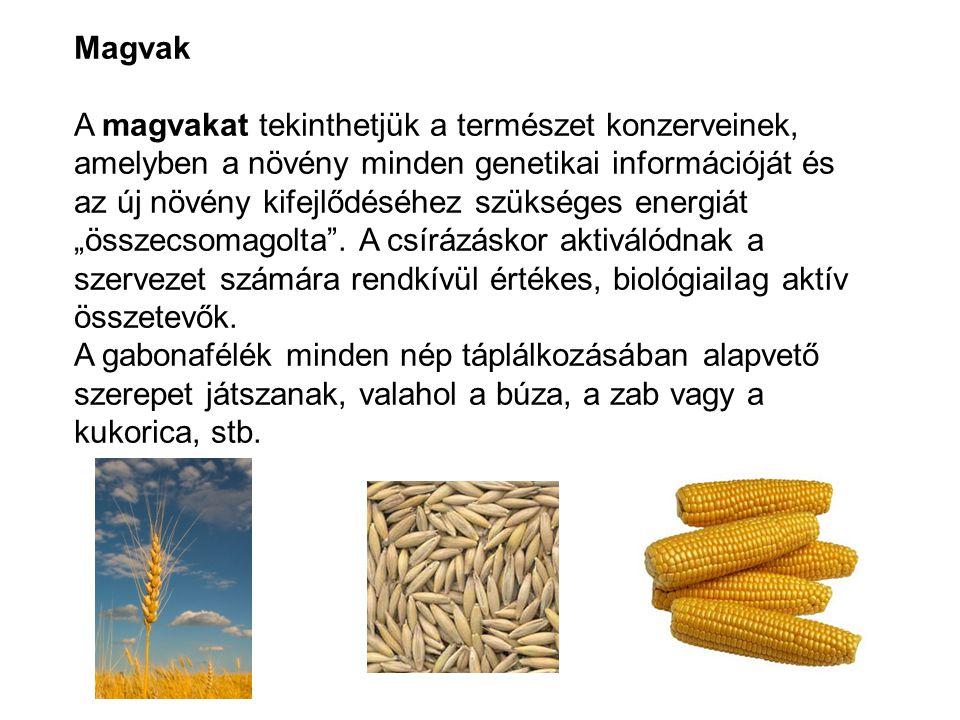 Magvak A magvakat tekinthetjük a természet konzerveinek, amelyben a növény minden genetikai információját és az új növény kifejlődéséhez szükséges ene